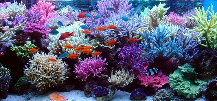 How to Maximize Coral Growth & Coloration