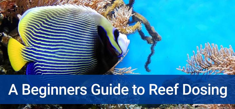 A Beginners Guide to Reef Dosing